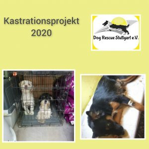 Kastrationsprojekt_2020