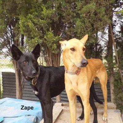Zipi-Zape-2